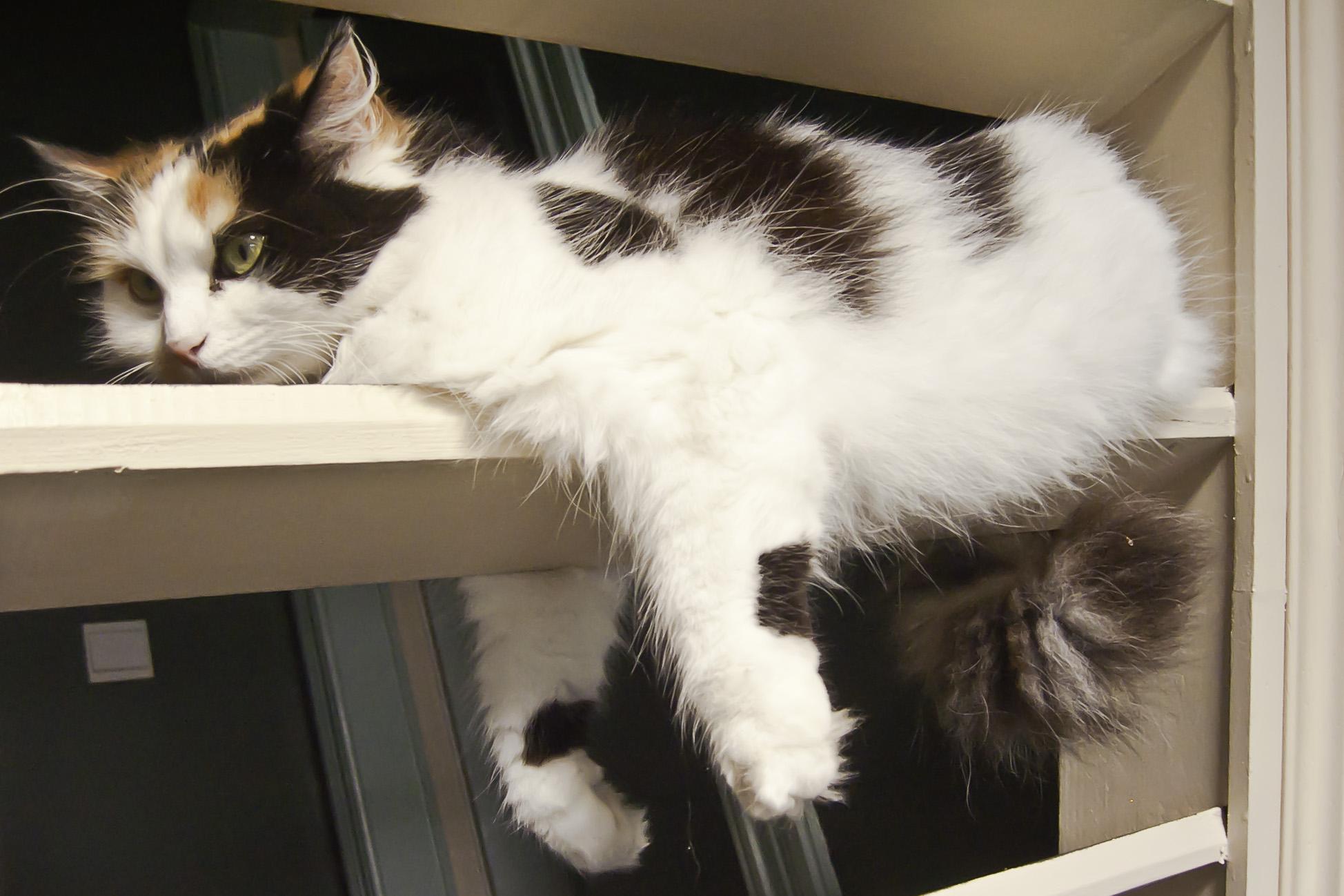 Square Gif Cat Fall